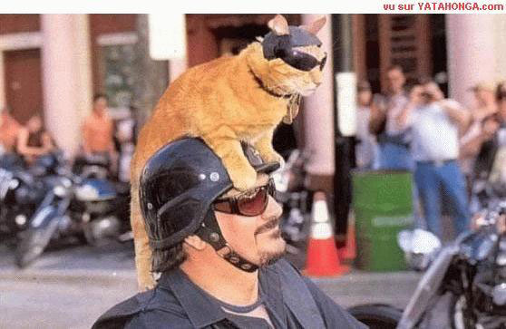 cat on mans helmet